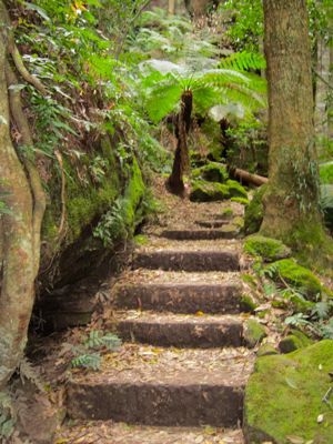 Grand Canyon walk, Blackheath, Blue Mountains