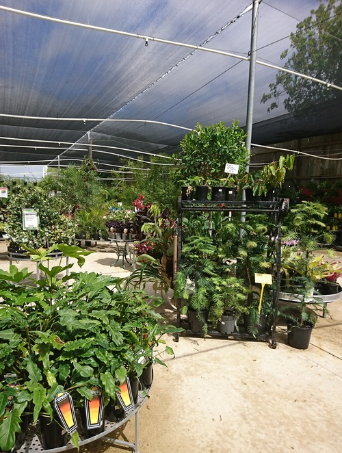 Jungle in Willunga, Nursery Willunga, Plant Shop Willunga