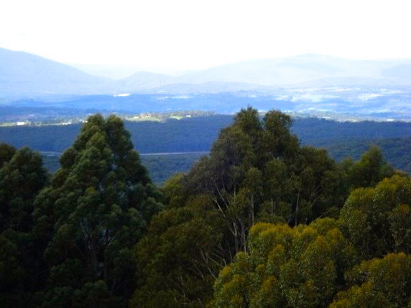 National Rhododendron Gardens, Olinda, View over Yarra Valley