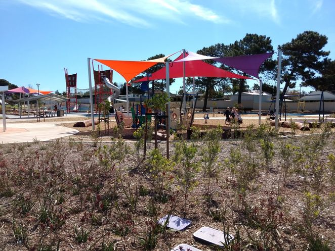 Roy Marten Park, Taperoo, dog park, playground, play, kids, dogs, park, free, nature play