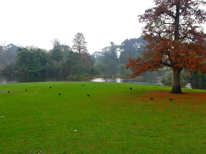 The Taxodium Lawn