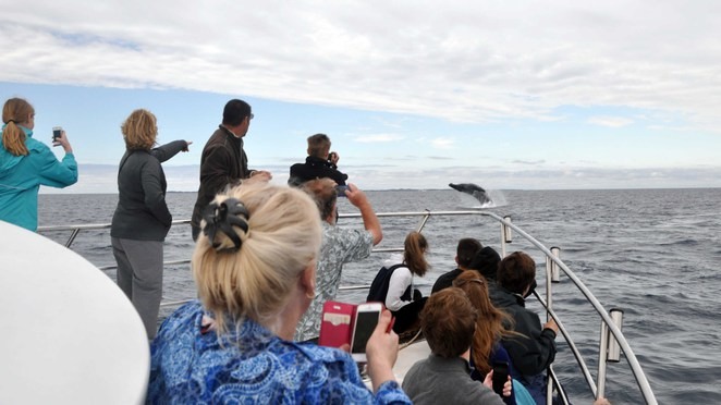 Whale watching Perth Humpback whales