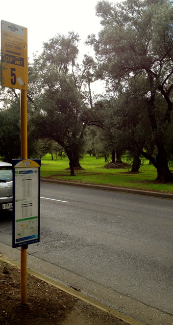 adelaide olive trees, olives, olive plantation, olive press, historical walks, parklands