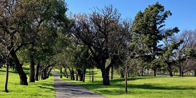 adelaide park lands cycling tour, awcc, city of adelaide, free cycling tour in the park, australian walking and cycling conference, health and fitness, bonython park, heritage listed adelaide park lands