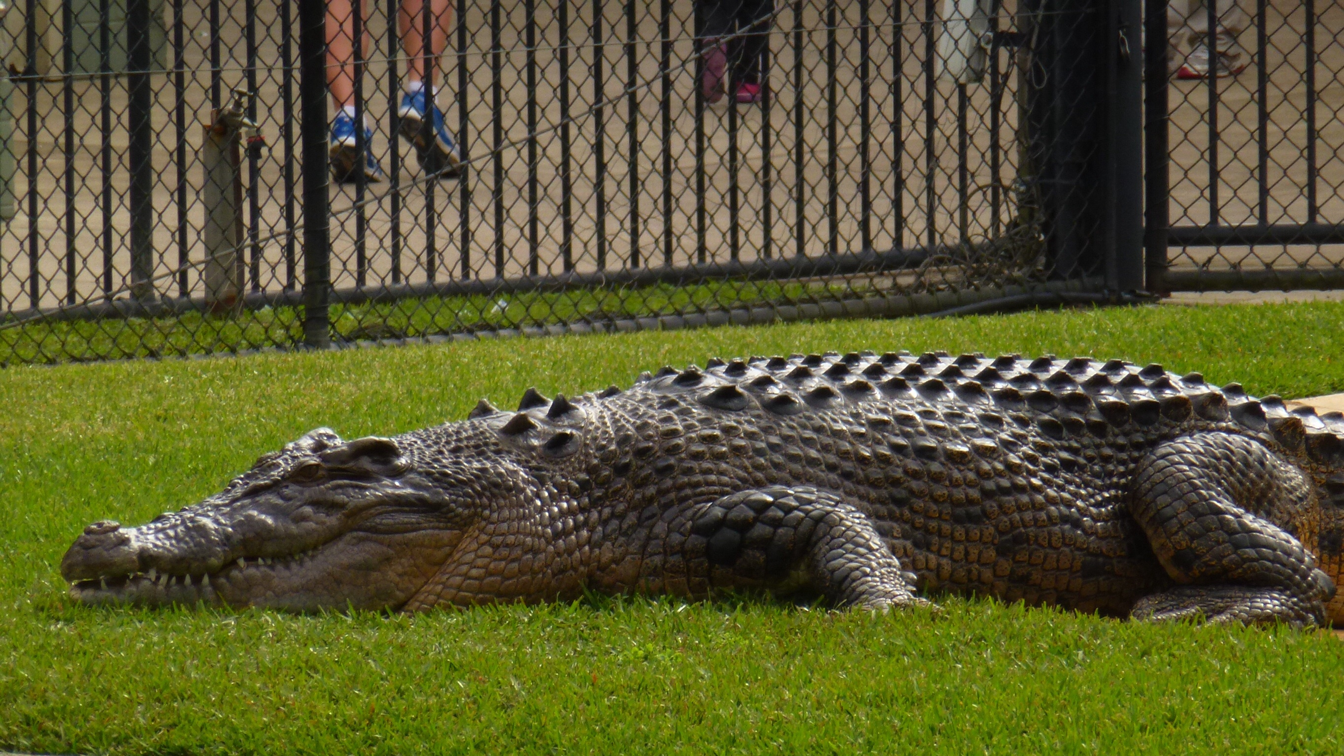 1000 Images About Australien Zoo On Pinterest