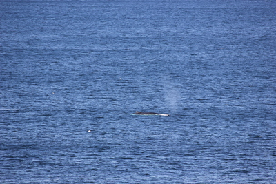 Cape Solander whale watching