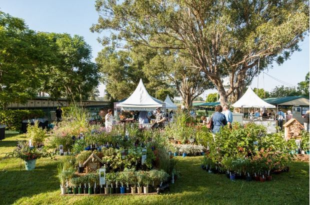 collectors plant fair, flowers, plants, garden, nsw
