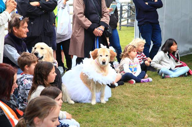 Dogs of Lennox Head Festival