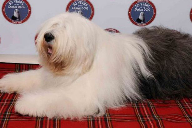 Meet the Dulux Dog at ...