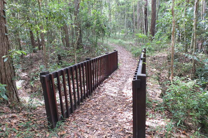Six Low-cost Guided Walks, Maroochy Regional Bushland Botanic Gardens, Our Local Wattles, Spring, blooming of wattles, Acacia, Rare and Threatened Plants, National Threatened Species Day 2021, How to Catch a Duck and other things, hunter gathering food techniques, early Australians, how ducks, fish, yabbies were caught, explore local bushland, search for honey, possums, koalas, Walking with Dinosaurs, focus on plants existed 100 million years ago, age of dinosaurs, choose your walks, dust off cobwebs and mildew, cool September spring mornings, Greg Miller Photography
