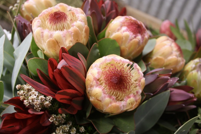 Going wild with native proteas