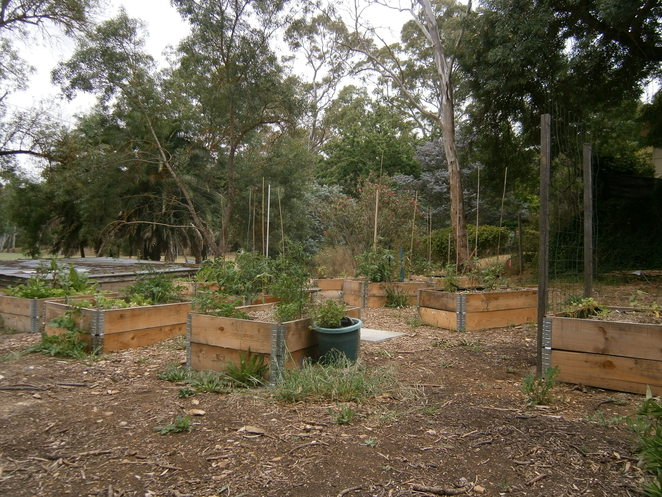 joans pantry, cafe, blackwood, snacks, kitchen garden, community