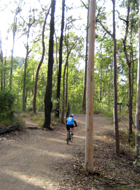 Cyclist at Mt Coot-tha