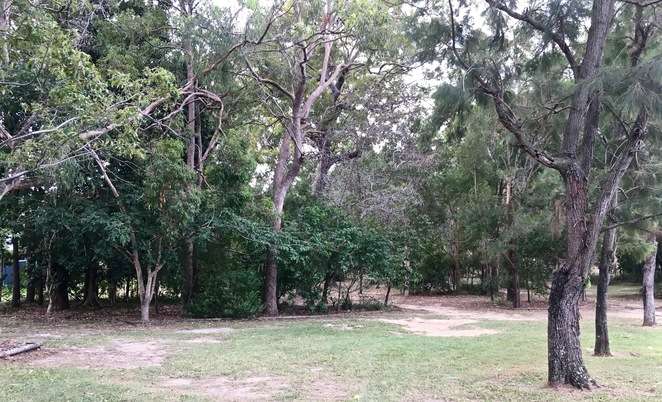 Ngulli Bui Park, Gold Coast, Picnic tables, Picnic Spot, Dog Walking, Olsen Avenue, Harbourtown, dog walking, walking track, Trees,