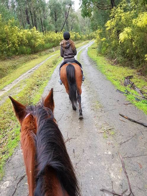 ryders horse riding tours bunyip