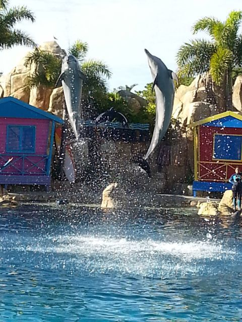Seaworld, Australia, Resort, Sea World, Dolphin, Seal, Accommodation, Gold Coast
