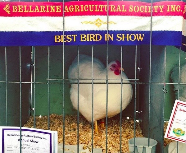 Bellarine Agricultural Show, 2019, Bellarine Show, Country Fairs, Geelong, Shows, Portarlington, Labor Day Weekend, March 2019, Things to Do, Country Show,