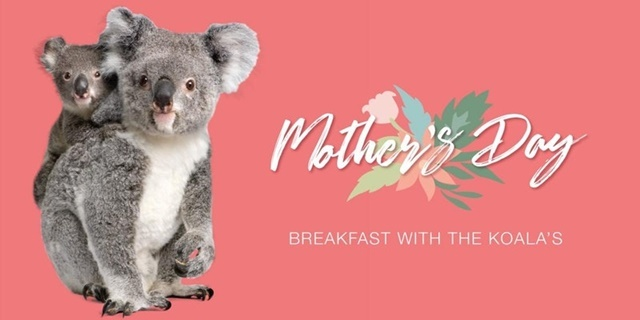 Breakfast,with,koalas,for,Mothers,Day