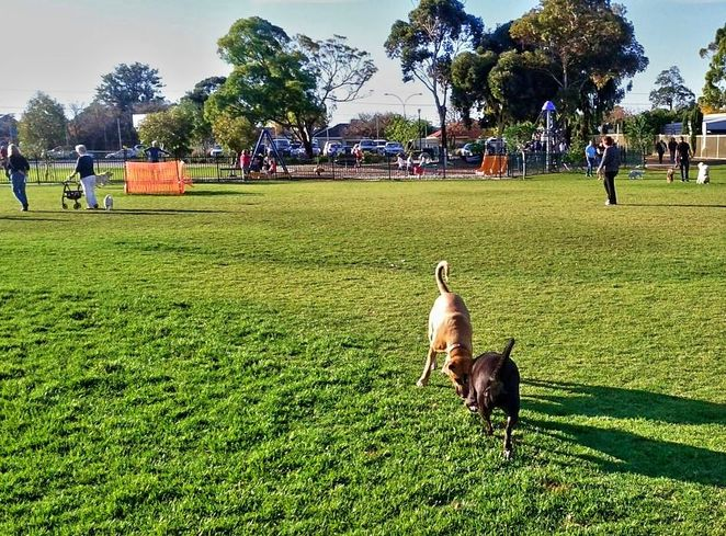 dog park, adelaide, dogs, off leash, exercise areas, park, hazelmere reserve, glengowrie