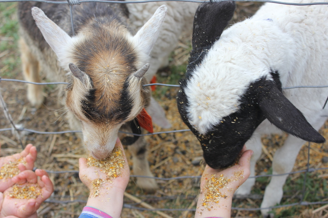 Farm Fun, baby animals, farmers, children, fun for children, school holidays, farms,