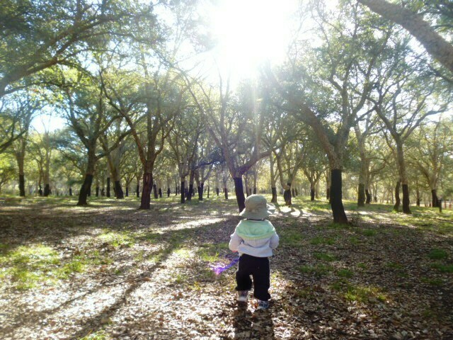 forest bathing in canberra