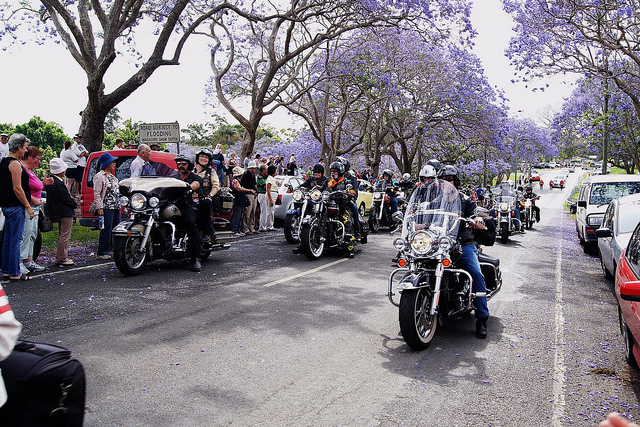 Goodna Jacaranda Festival (Attribution: Flickr - Tatters)