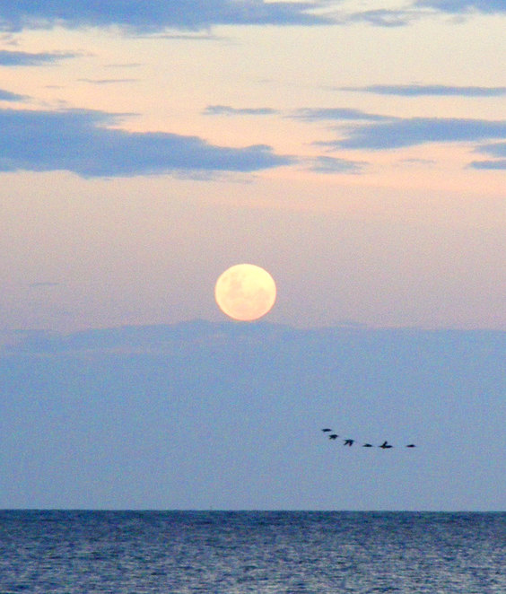 A full moon rising seeing from King Island at Wellington Point