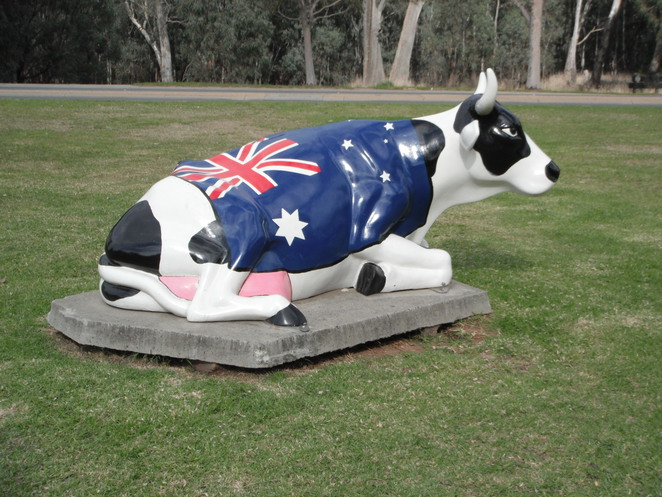 Moooving Art cows in Shepparton