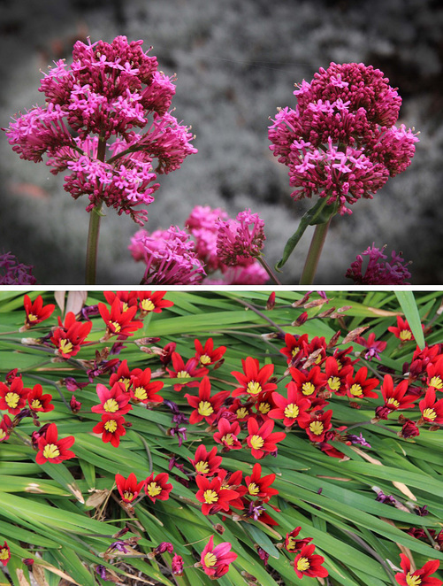 pink & red flowers.