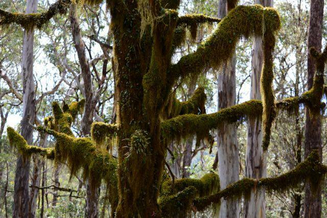 Beautiful mossy trees are just one of the many attractions that make Point Lookout worth a longer stay
