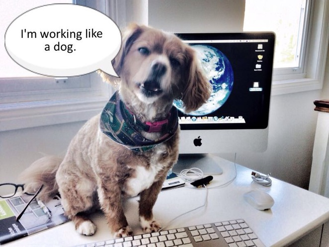 take your dog to work day, pets at work, reduce stress, dogs, cats, workplace, purina, pets