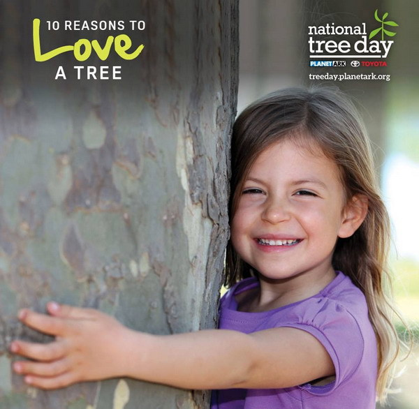 tumbulgum,tweed shire,national tree day,
