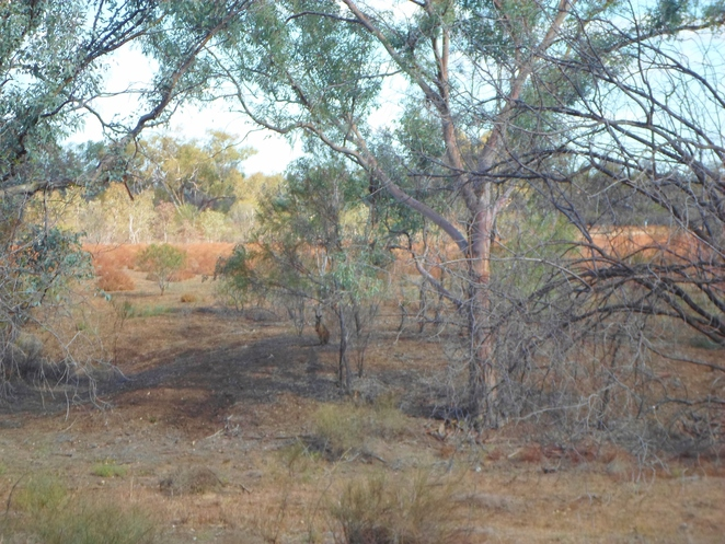 warrego river walk, cunnamulla things to do, cunnamulla activities