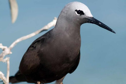 birds,of,Abrolhos,islands