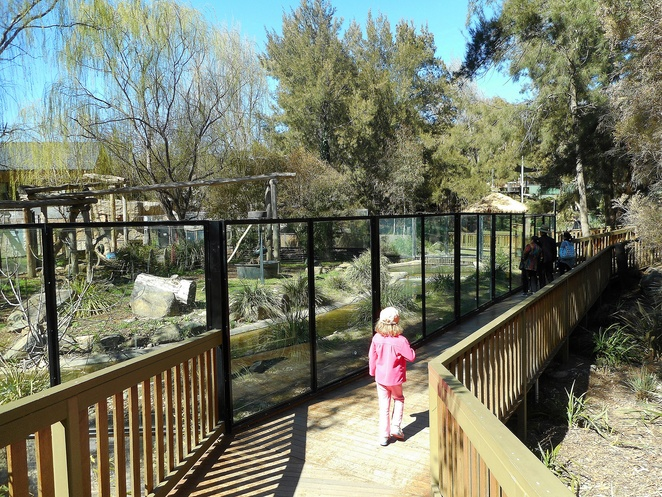 national zoo and aquarium, canberra, ACT, tours, enclosures, animals, school holidays, whats on, families, kids, children tours,