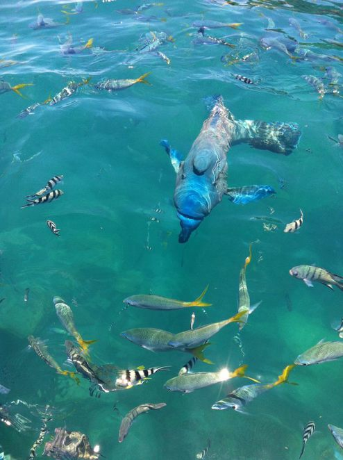 Snorkeling, Whitsundays