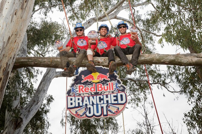 tree, trees, climbing, branches, red bull, kapunda, october, 2019