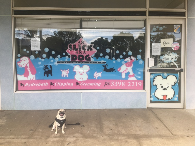 as slick as a dog grooming salon, grooming salon, dog grooming, dog service, hydrobath, carina, eastern suburbs, southern suburbs, brisbane, southside, bayside, grooming salon, dog friendly, pet service, pet shop