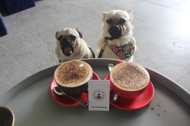 bedouin brew, coffee shop, Brisbane, southern suburbs, south side, dog friendly, cafe, espresso bar, coopers plains, acacia ridge, hrvst juice, healthy, vegan, coffee