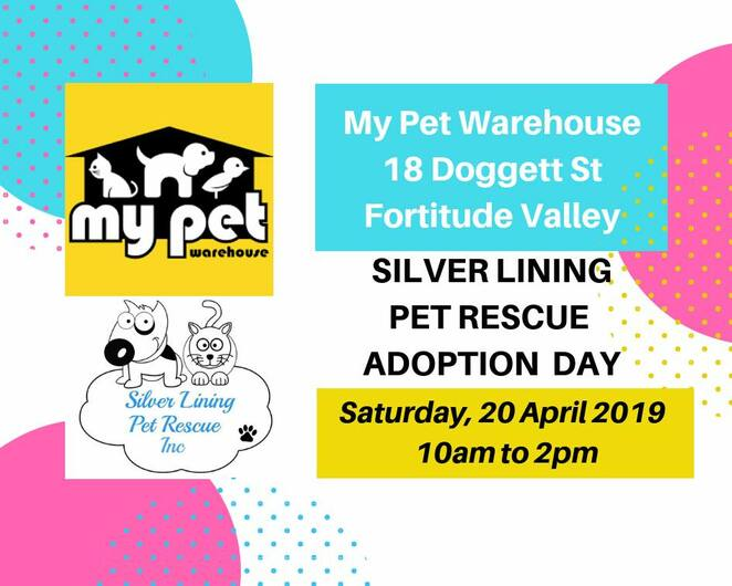 Dog Friendly, Animals & Wildlife, Shopping, Fortitude Valley, Near Brisbane, Volunteering, Family, Learn Something