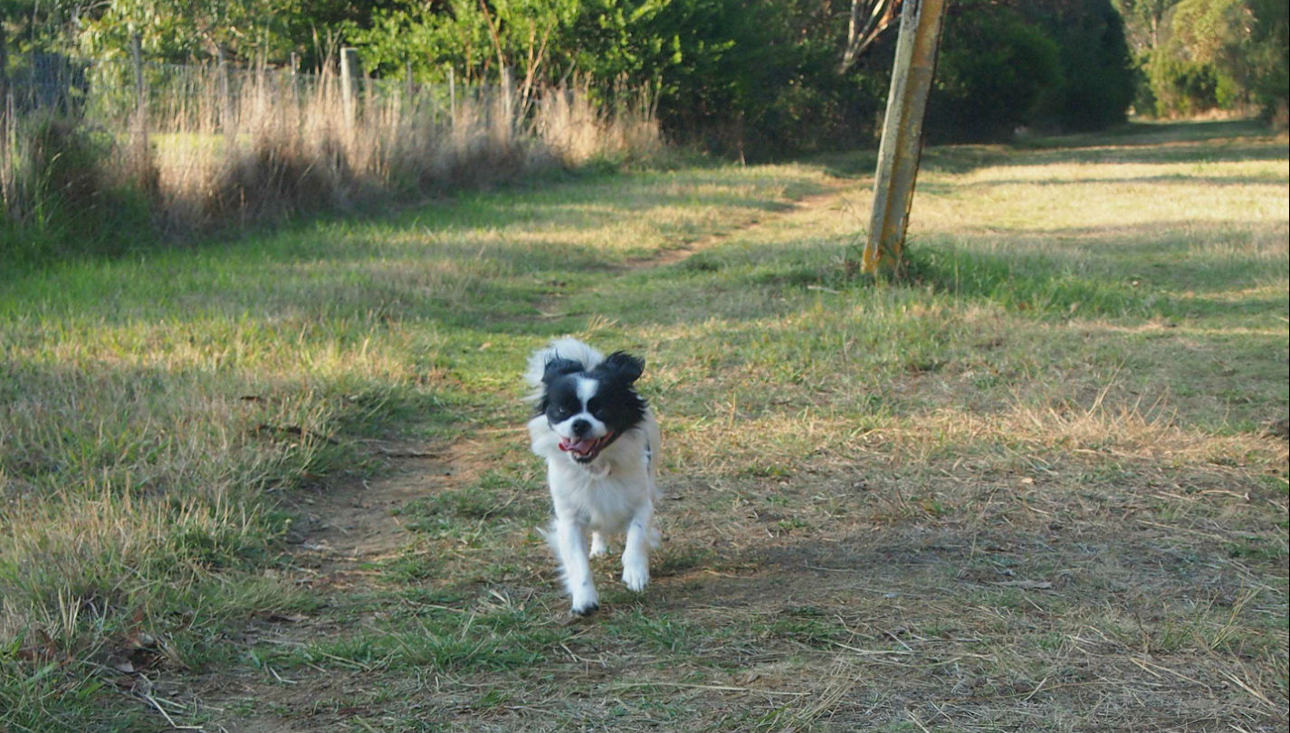 Dog Day Care Melbourne Northern Suburbs
