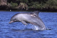dolphin spotting, mothers day ideas, adelaide dolphin cruises