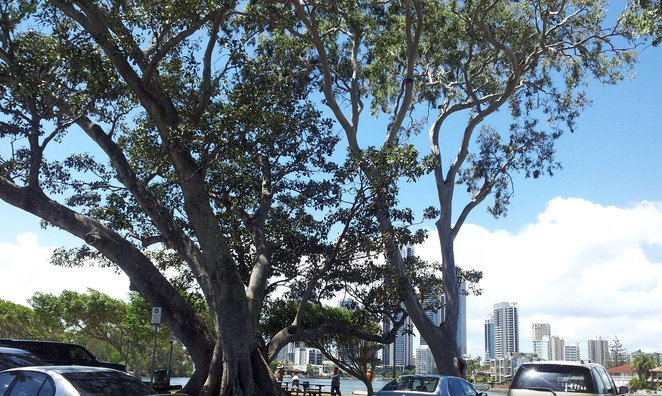 Evandale Parklands, Surfers Paradise, Gold Coast, picnic, beach volleyball, shade, nerang river, fishing, swimming,