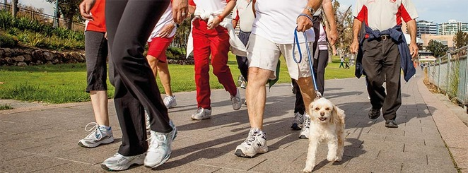 Free Heart Foundation Walks, Sunshine Coast, exercise, low impact, low injury risks, lowers risk of heart disease and stroke, reduces risk of Type 2 diabetes, win-win, free community-based walking groups, manage weight, blood pressure and cholesterol, maintain bone density, improves balance and co-ordination, mental health and wellbeing improves, every week, make new friends, beauty of region, Alexandra Headlands, Birtinya, Buddina, Buderim, Caloundra, Coolum Beach, Golden Beach, Kenilworth, Little Mountain, Maleny, Mapleton, Maroochydore, Mooloolah, dog friendly, pram friendly, choose to move, walk yourself happy and healthy