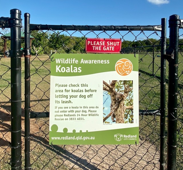 Visitors to GJ Walter Park can help our urban koalas by keeping an eye out for any on the ground, or any that look sick or injured