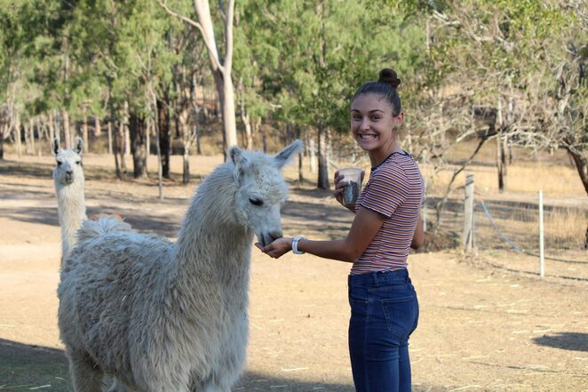 Limber Up with Llamas, Llama Yoga, overload of cuteness, fun, distraction, relaxation, stretching, classes limited, hand feed llamas, llamas are super smart, animal therapy, reduces cortisol in children with autism, meditation, light stretch, Karmably, learn, love, laugh, llamaste
