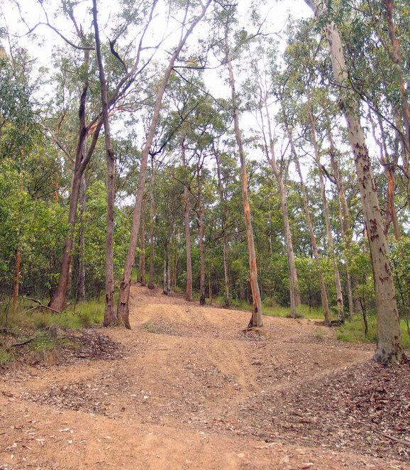 For the fit looking to exercise, combine the Lookout Trail and the Spotted Gum Trail