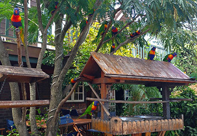 lorikeets, rainbow lorikeets, feeding lorikeets, the polish place,