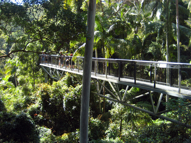 Mt Tamborine Skywalk is a great place for your kids to experience rainforest at tree top height