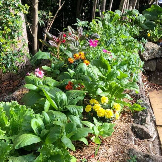the healthy patch, free masterclass, grow your own food, community event, fun things to do, gardening, organic food, environmentally friendly, sustainable, grow food not lawns, edible garden, grow seasonally, wholefoods